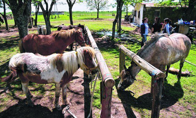 rehabilitación. Los caballos del predio fueron entregados por carreros o rescatados de la calle en mal estado.