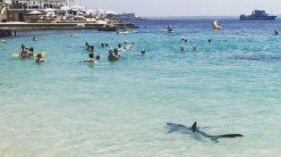 Un tiburón siembra el pánico en Mallorca