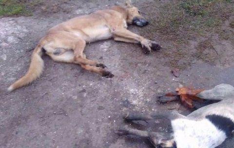 muerte. Muchos animales aparecieron así