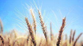 CRA, por la libertad del comercio de trigo