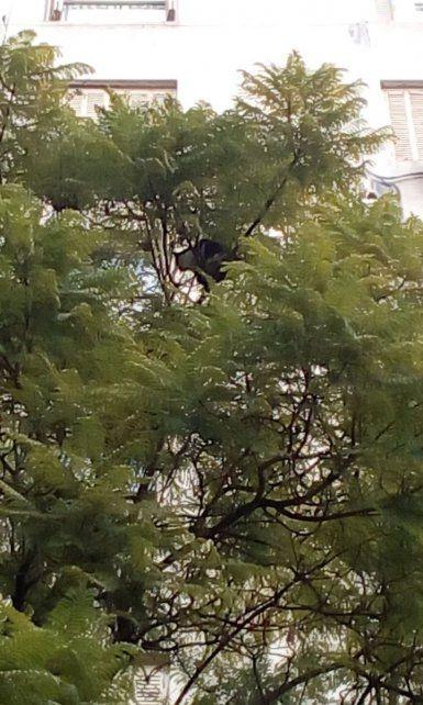 Gran despliegue para rescatar a un gato que huyó cuando lo llevaban a castrar