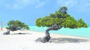 Aumentan los viajeros a Aruba