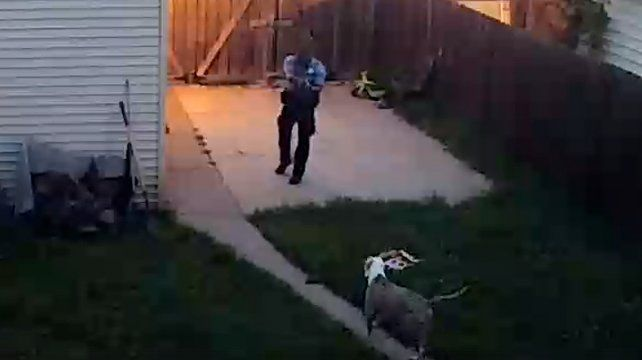 Polémica mundial por un policía que le dispara a dos perros en legítima defensa