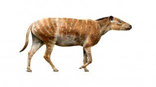 La nueva especie habitó la zona de la Isla Marambio hace unos 50 millones de años.