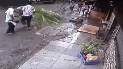 Murió aplastada por una palmera mientras caminaba por la calle