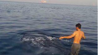 El video viral de dos pescadores haciendo surf sobre el lomo de un tiburón ballena