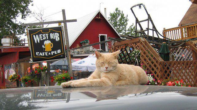 Stubbs partió mientras dormía plácidamente en su casa de Talkeetna.
