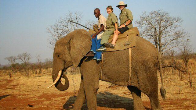 Un elefante usado para trasladar turistas pisoteó y mató a su domador