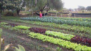 Contigiani: Hay que alentar modelos de producción agroecológicos de alimentos