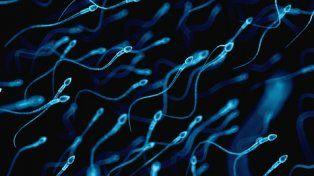 nadando. Millones de espermatozoides buscan fertilizar el óvulo cada vez que hombre y mujer tienen relaciones