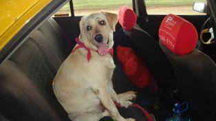 Easy Taxi lanzó un servicio para que los pasajeros  puedan viajar con sus mascotas