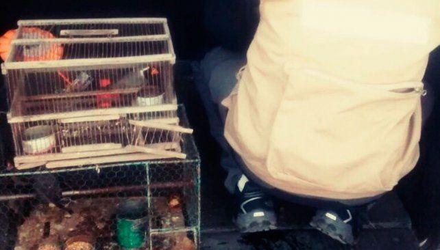 Detienen a un hombre que vendía aves a través de la red social Facebook