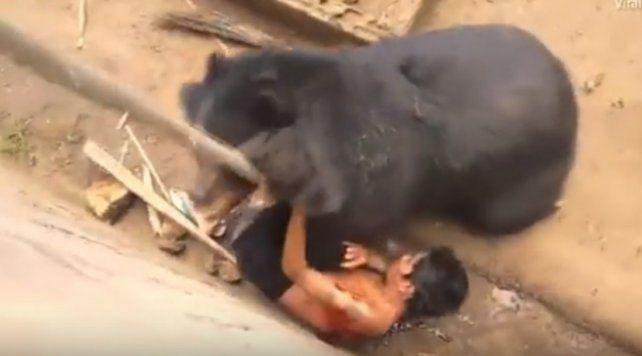 Un turista sobrevivió al feroz ataque de un oso