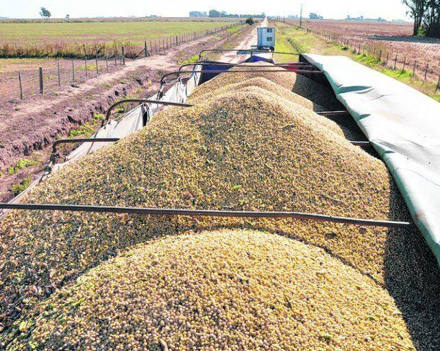 mejor precio. La soja disponible mejoró su cotización por la suba del dólar.