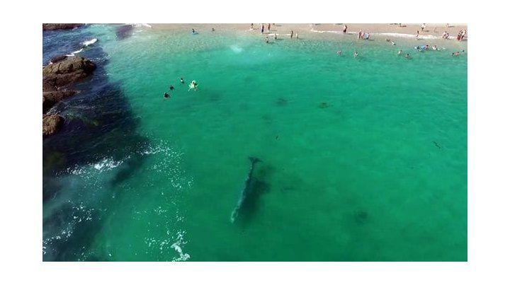 Una enorme ballena sorprendió a los turistas que nadaban en la playa
