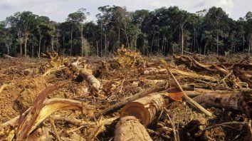 Deforestación. Estamos obligados a que el campo sea una actividad económica sustentable, dijo el diputado.