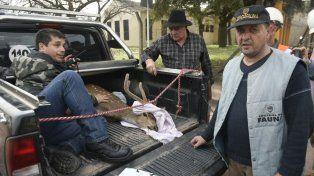 Rescataron un ciervo de las aguas del Paraná en la zona sur de Rosario