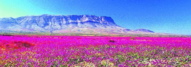 Chile, el color del desierto