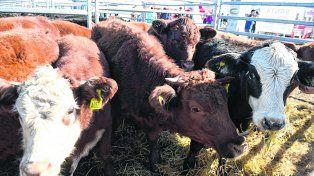 estrategias. Especialistas destacaron la importancia de producir más terneros en la cría ganadera.