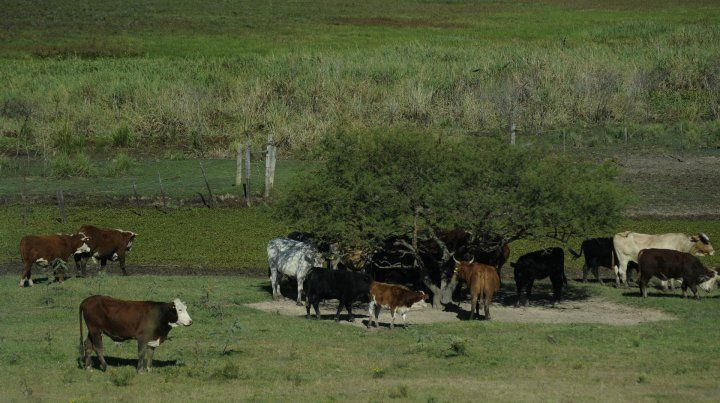 Los lotes detectados por la provincia están en San Eduardo