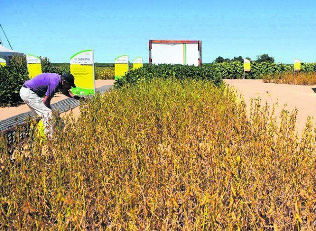 innovación. Los semilleros apuestan a la tecnología para sumar eficiencia.