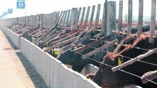 buena comida. Al arribo al feedlot los terneros necesitan nutrición específica.