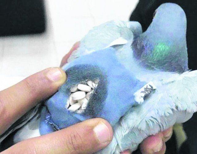 narco reparto. La paloma y el cargamento dentro de una bolsita.