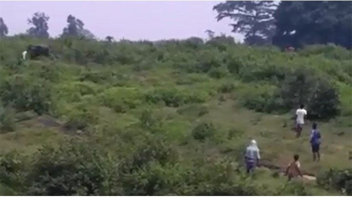 Se quiso sacar una selfie con un elefante y murió aplastado por el animal