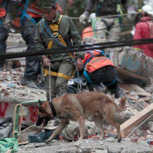 se eleva a 318 la cifra de muertos por terremoto en mexico