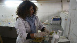 Celia Machado en el laboratorio, donde contagia la pasión por la ciencia a los estudiantes del profesorado.