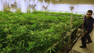 Dave Wilson, un cultivador de marihuana en Illinois (Estados Unidos). En nuestro país actividad de este tipo no está permitida
