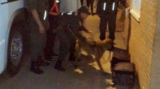 Maru en acción. La perra adiestrada por Gendarmería detectó cocaína en dos valijas.