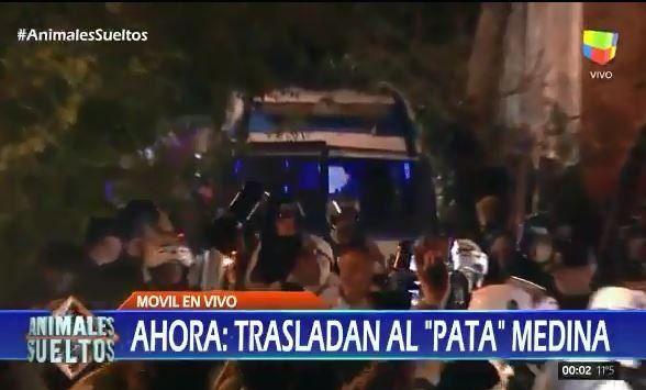 Animales Sueltos mostró un video exclusivo de cómo trasladaron a Pata Medina