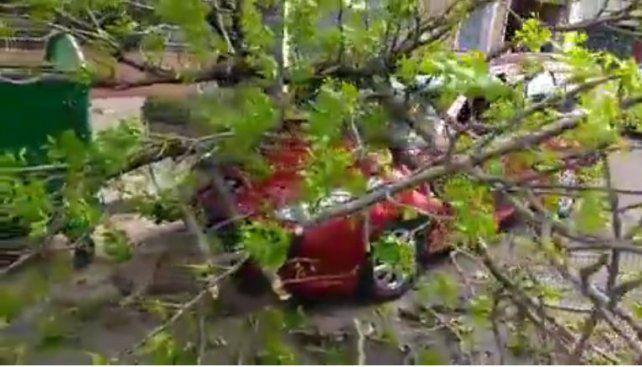 Así quedó el vehículo al caerle la rama encima.