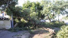 Defensa Civil recibió más de 40 denuncias por árboles y ramas caídas. (Foto de archivo)