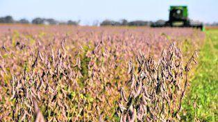 el cultivo estrella. En la Argentina este año se recortará el área sembrada con soja y la producción bajará 6%