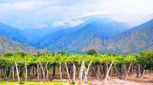Alto vino. Actualmente existen más de 40 bodegas que están abiertas al público y se ofrecen visitas guiadas y degustaciones.