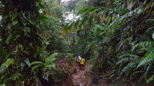 camino andaquí. Colombia ocupa el segundo lugar en biodiversidad.