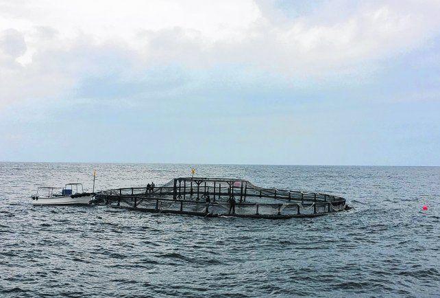 cosecha marina. La población mundial consume un 5% de proteínas marinas. El país