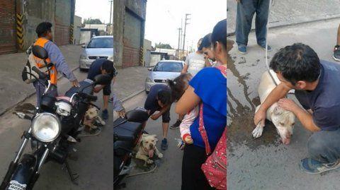 increíble. El perro era arrastrado por la calle por un motociclista.