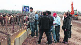 propuesta. La ganadería argentina podría mejorar la calidad de vida en Africa.