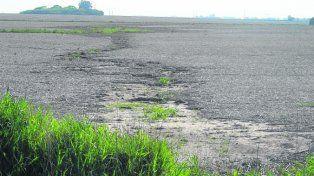 soluciones. Incorporar cultivos de cobertura mejora los suelos.
