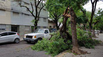 Rama caída en Cochabamba y Alem.