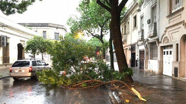 Zeballos al 2700. El agua y el viento hicieron caer una pesada rama sobre el pavimento.