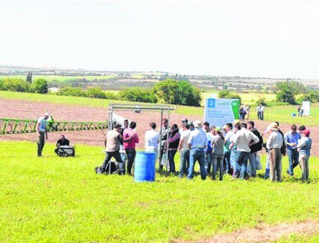 in situ. Los analistas examinaron el estado de los campos.