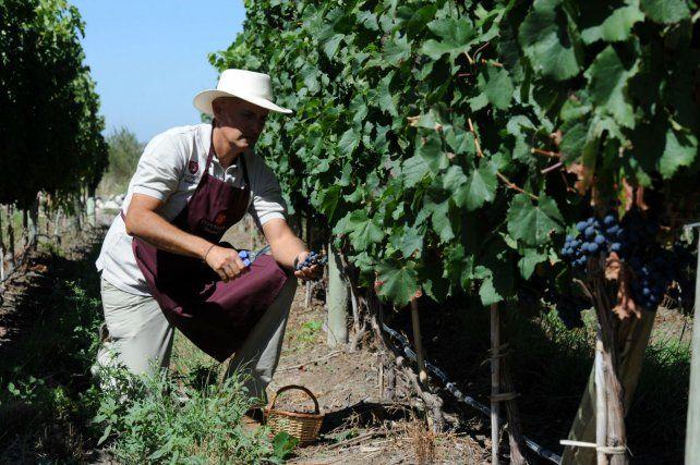 Vitivinicultura. Las economías regionales están en alerta por medidas impositivas del gobierno nacional.