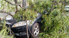 Arbol caído sobre vehículos. (Foto: @andréspetersen)
