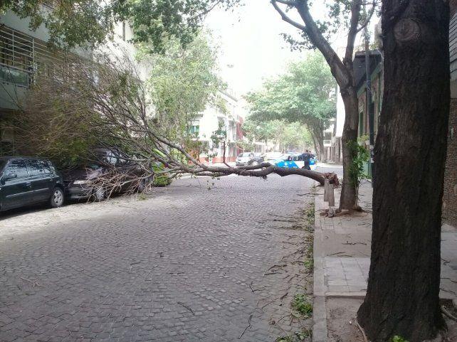 Otro árbol caído sobre un auto en Zeballos y Necochea.