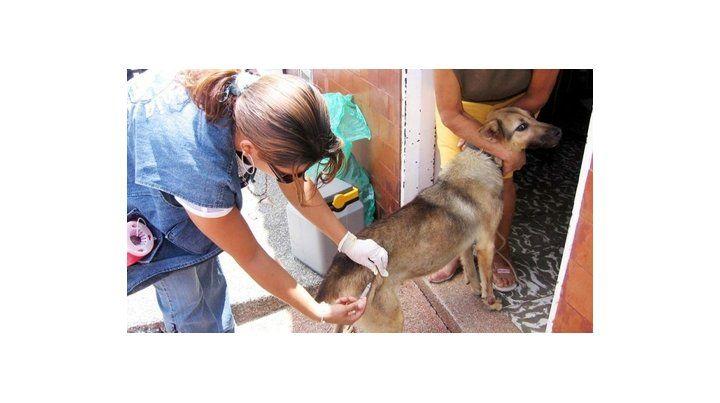 Vacunarán canes en Santa Cruz.