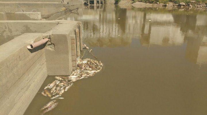 La mortandad de peces no fue causada por contaminantes